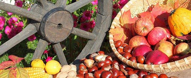 Früchte im Herbst