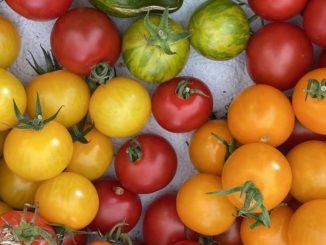Verschiedene Tomatensorten zum Tag der Lebensmittelvielfalt